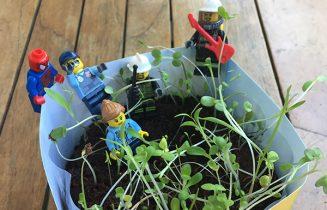 grandir-ensemble-plante-1