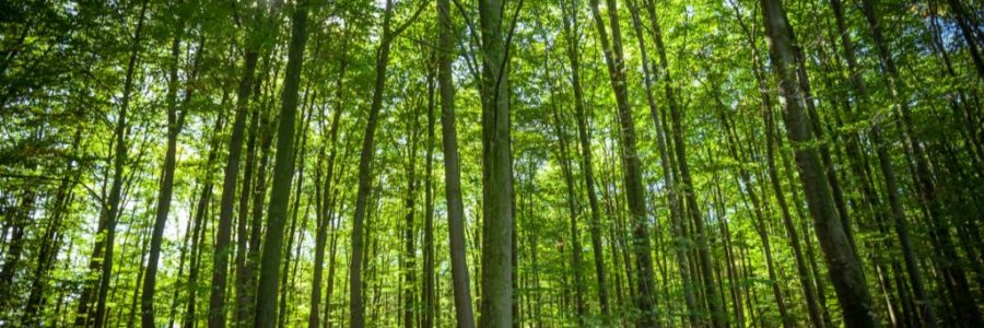 forest trees. nature green wood